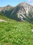 鷲羽岳とハクサンイチゲのお花畑
